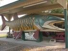 20120823 11 Nevis--World's Largest Tiger Muskie